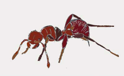 MooScience, Fire Ant by Susan Fluegel